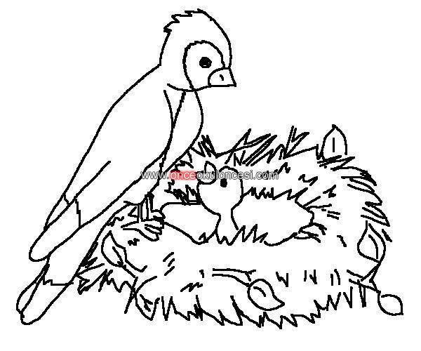 Kuşlar Axipixde Kuşlar Boyama