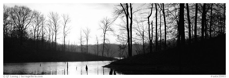 Panoramic Black And White Picturephoto Winter Landscape With Bare