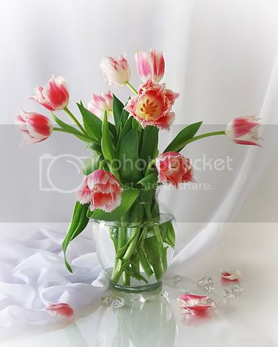 Pink tulips fine art still life photograph
