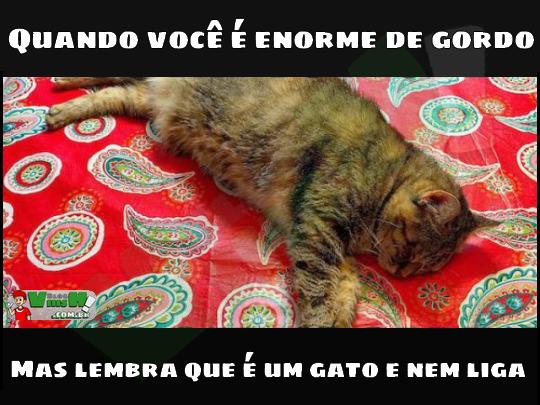 Blog Viiish - A realizade do gato gordo