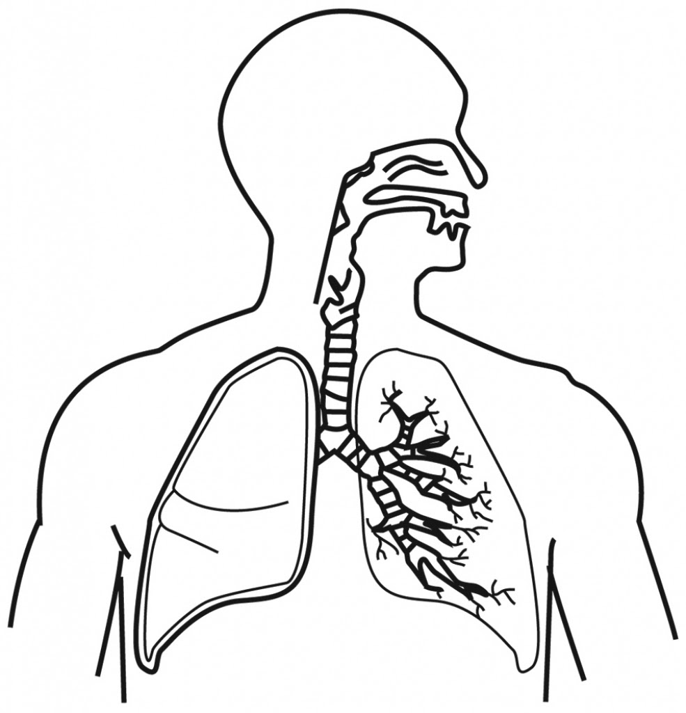 The best free Respiratory drawing images. Download from ...