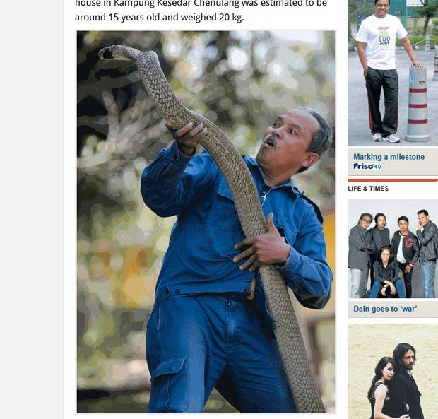 Cobra-rei de quase 5 metros foi encontrada na cozinha de casa na Tailândia. (Foto: Reprodução)