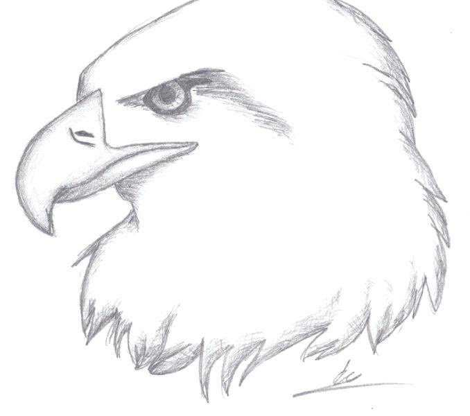 Philippine Eagle Drawing Easy