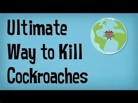 Best way to kill roaches in apartment, how do i get rid of bed bugs from my bed