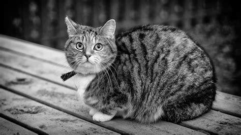 Free photo: Black And White, Cat, Animal   Free Image on Pixabay   1263654