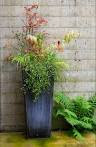 Potted Plant Ideas: 5 Top Tips for Your Patio's Planters ...
