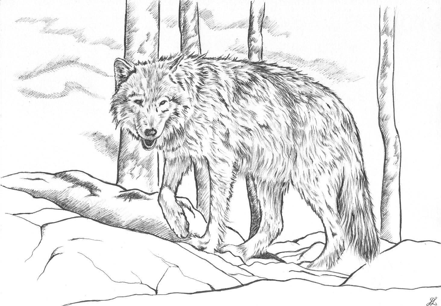 Coloriage Loup coloriage artistique loup Dessin feutre loup