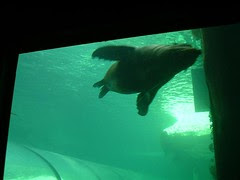 Seal Kat Dlm Sydney Aquarium, Sydney, Australia