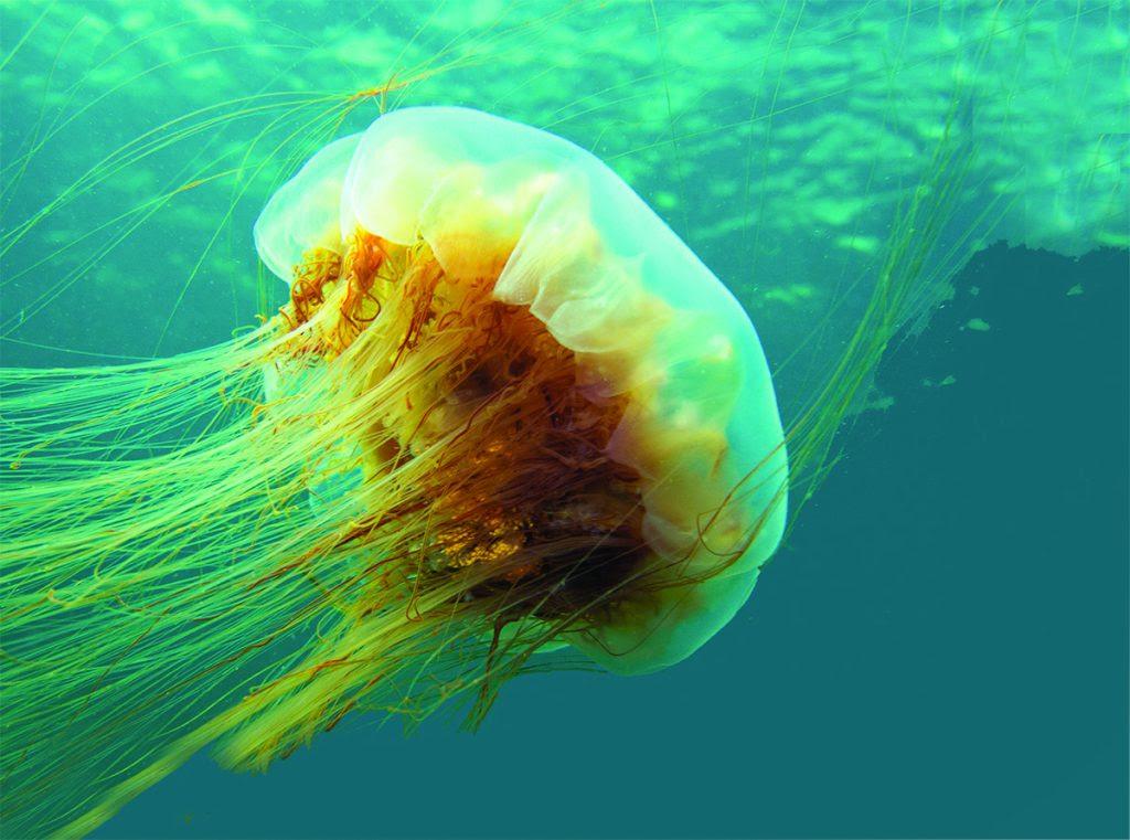 """Résultat de recherche d'images pour """"je deviens méduse"""""""