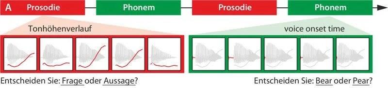 Flujo palabras gráfico que muestra que se hablan como parte del experimento.