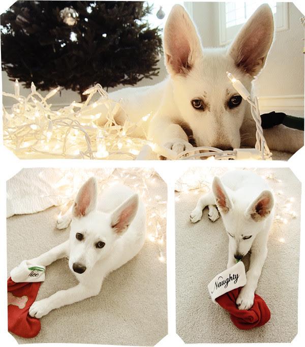 fleury christmas collage 1