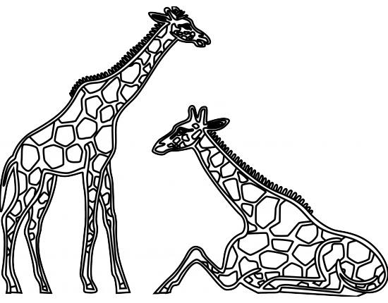 Download 7100 Gambar Animasi Harimau Hitam Putih  Paling Baru
