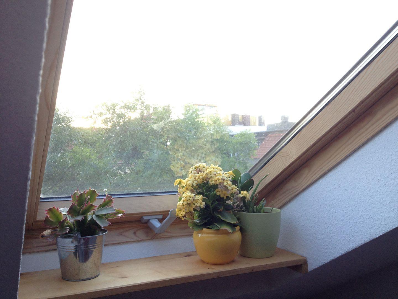 Beautiful Mornings at Inka's photo 2014-07-04053903_zps8d5073e2.jpg
