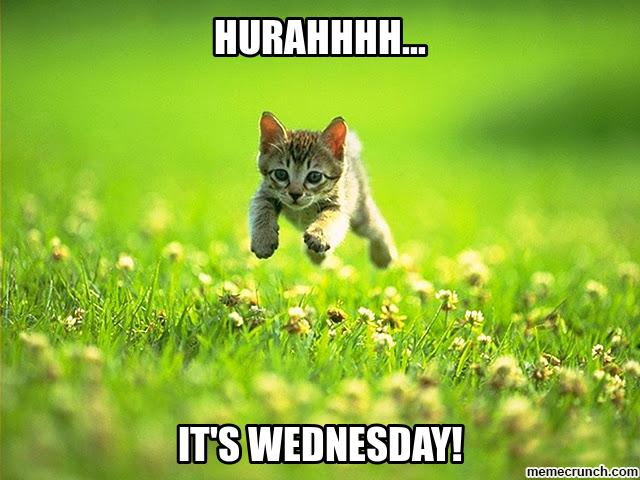 Bildergebnis für Happy Wednesday with cats