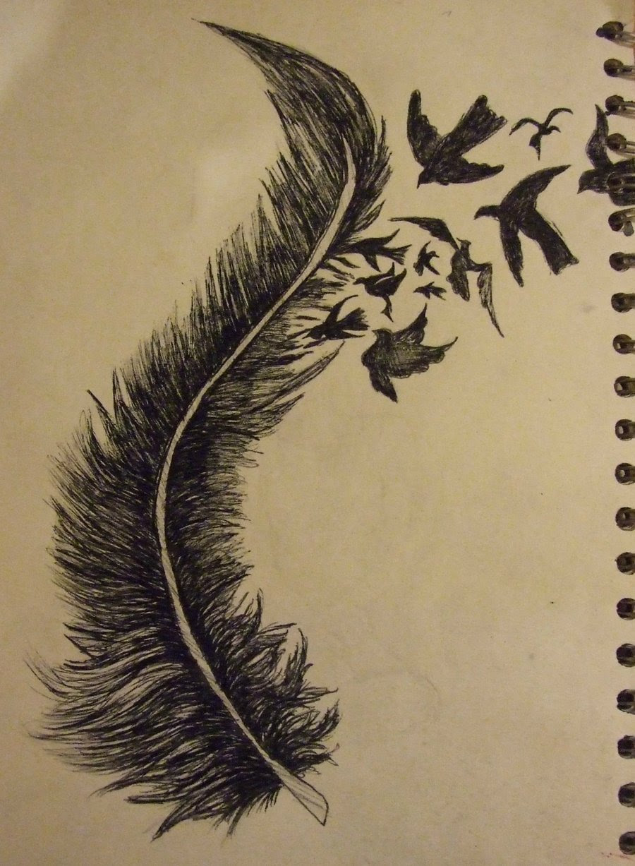 Bird Feather Drawing At Getdrawingscom Free For Personal Use Bird