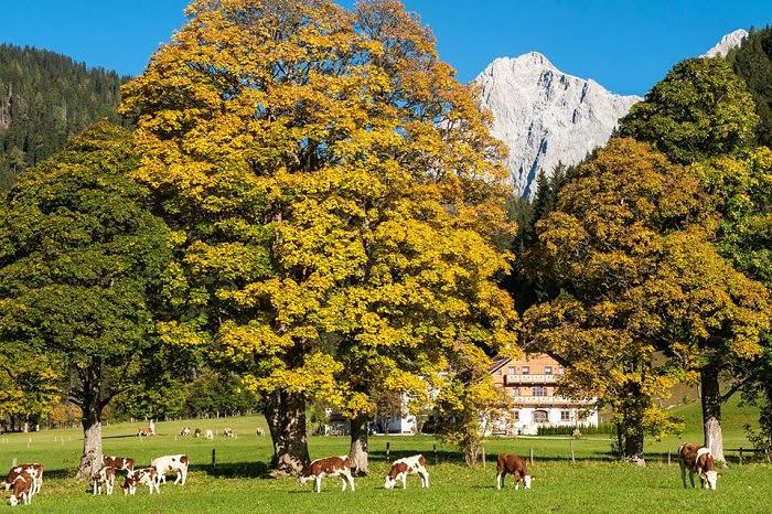 Οι φάρμες της Αυστρίας... στην ελιτ του αγροτουρισμού