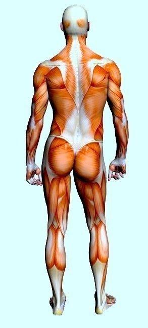 contratura, dor muscular, força, contração, esportes, atletas, sobrecarga, acidente
