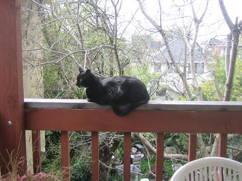 Cat on Rail 0029
