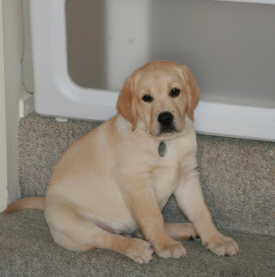 One cute puppy and his favourite step - he's not going to fit on it for much longer!