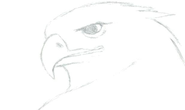 Realistic Easy Drawings Of Animals This group has only a few rules that i will post below so please make sure to read them in there fullest cartoons, anthros, and other non realistic drawings will be removed. realistic easy drawings of animals