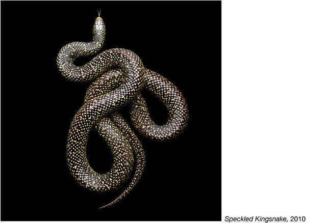 Mark Laita фотографии змей 14 (643x438, 41Kb)