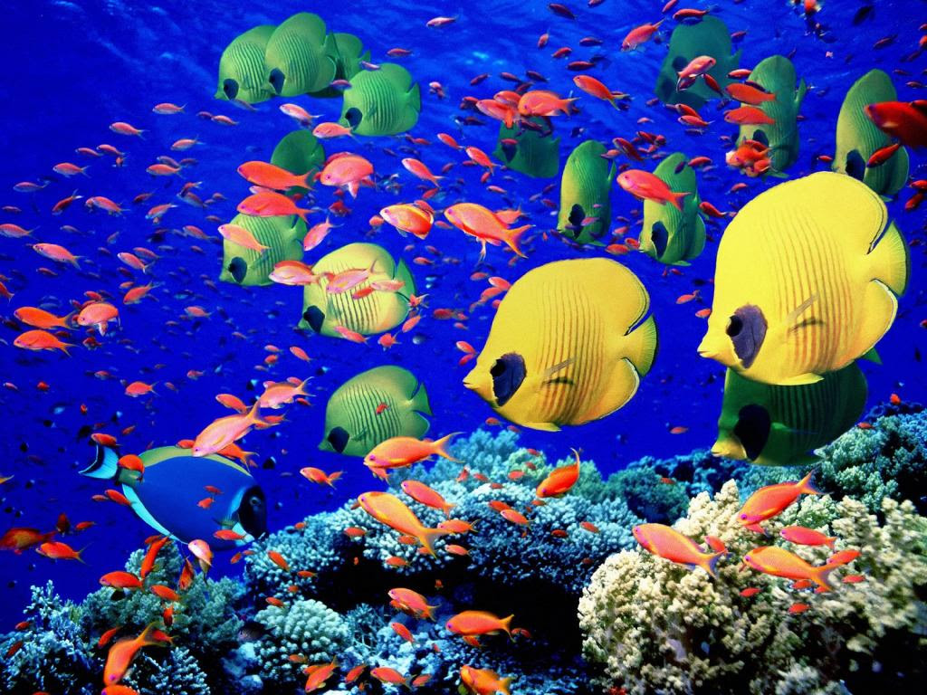 The Largest Coral Reef Tourism inwards The    Bali Tourist Destinations: 24 BALI NATIONAL GEOGRAPHIC