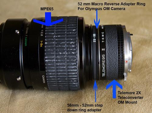 MPE65 non macro shot with 2X Telemore Teleconverter IMG_0457 mpe n telemore tc