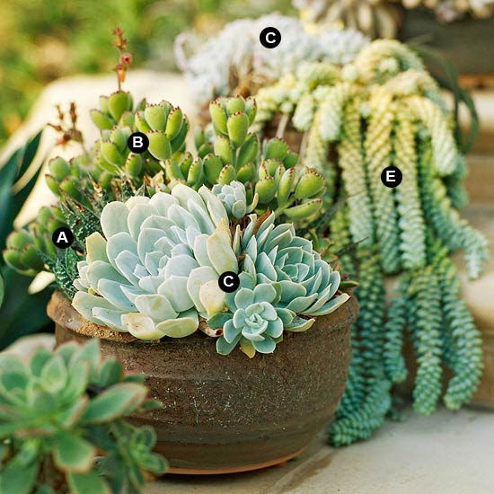 Succulent containers on steps