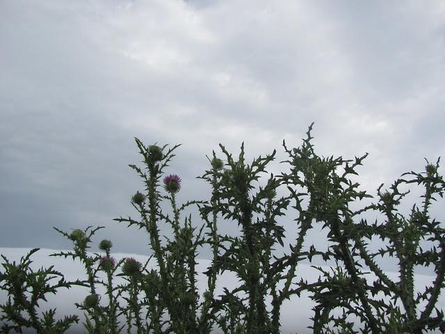 thorns on thursday