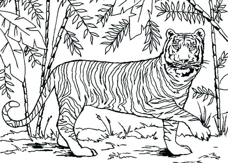Tropical Rainforest Animals Coloring Pages at GetColorings ...
