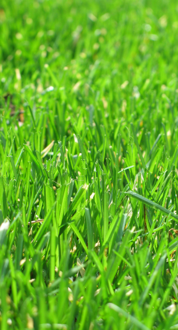 Pro Grass Lawn Care Lawn And Ornamental Care