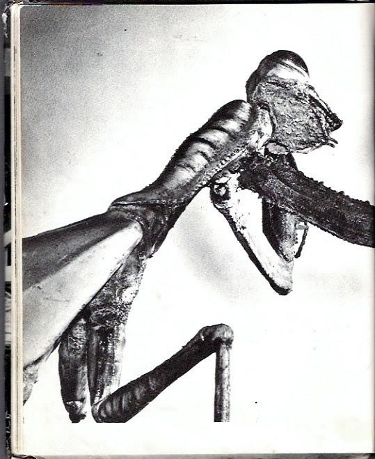 deadlymantis18