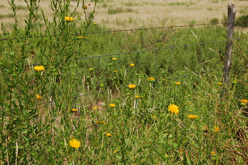 Ranch - Wildflowers