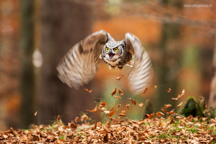 I Don't Give A Hoot: Angry Birds? No! It's Angry Owls ...