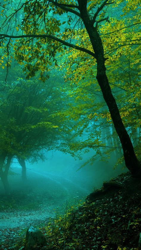 wallpaper spring forest pathway fog  nature  wallpaper  iphone android