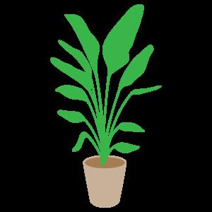 観葉植物のイラスト4 花植物イラスト Flode Illustration フロデ