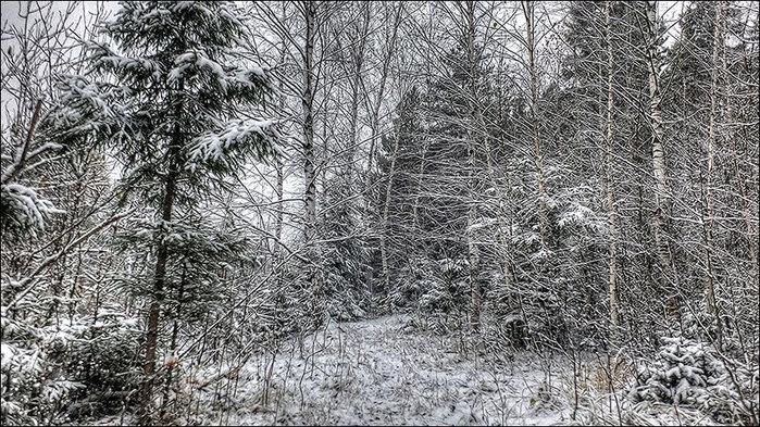 После снегопада/3673959_2 (700x393, 166Kb)