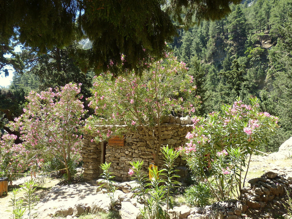 Flowers during the Samaria Gorge hiking trip