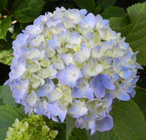 todayflowersDSCN7526