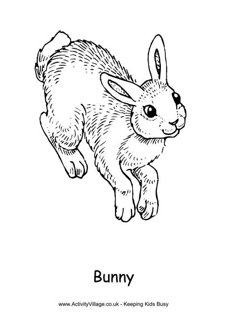 Realistic Bunny Coloring Pages at GetColorings.com | Free ...