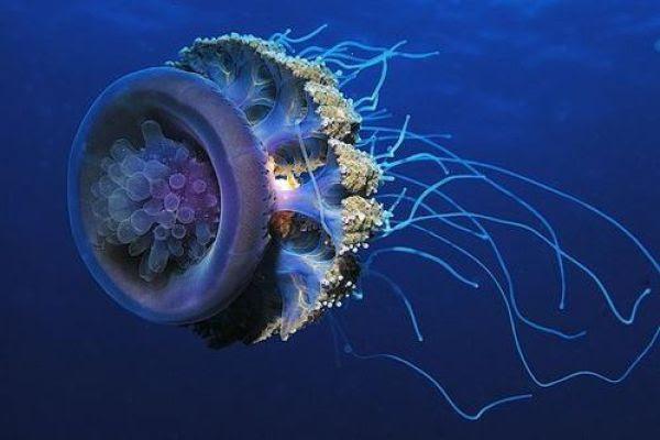 Uncanny Factoid: Jellyfish Blackout