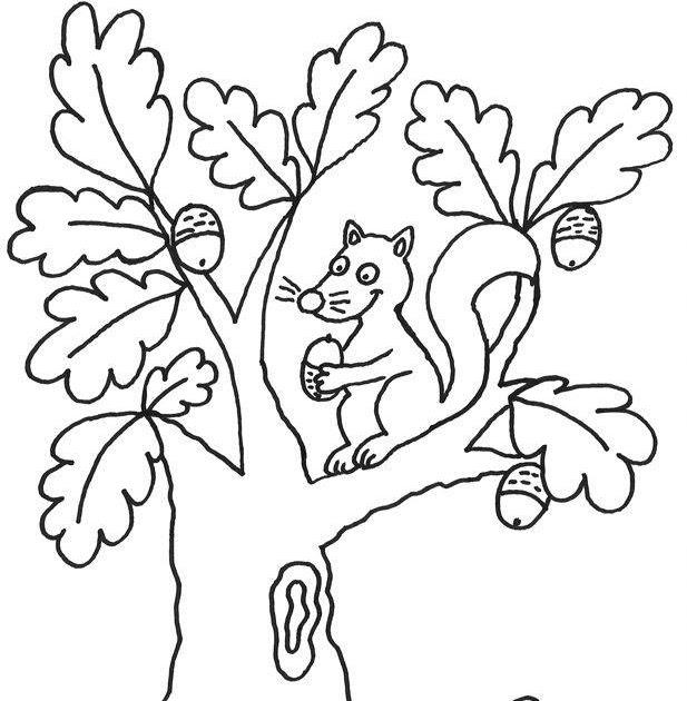 33 ausmalbilder herbst eichhörnchen  besten bilder von