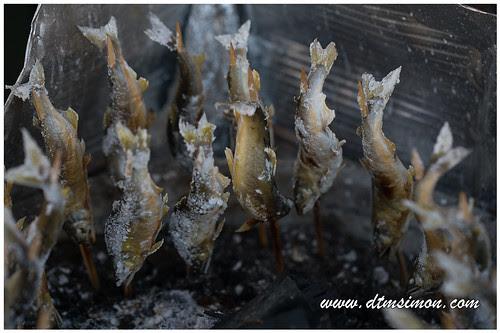 益子陶瓷祭鹽烤香魚04.jpg