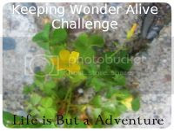 photo keepingwonderalivebutton_zps011672fd.jpg