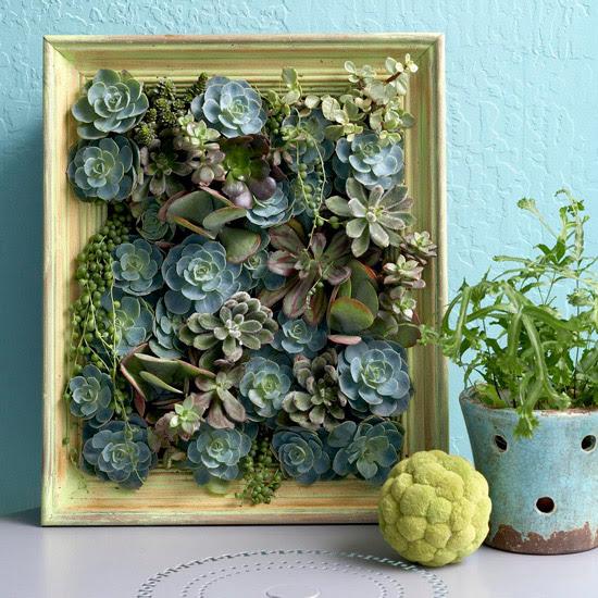 Succulent Project