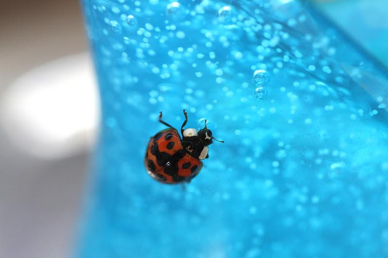 ladybug on handsoap3