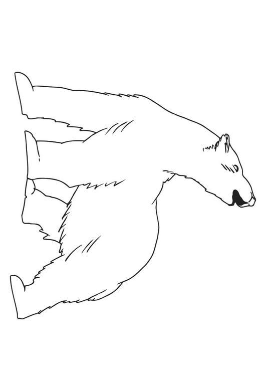 Dibujos Para Colorear De Osos Polares Imagesacolorierwebsite