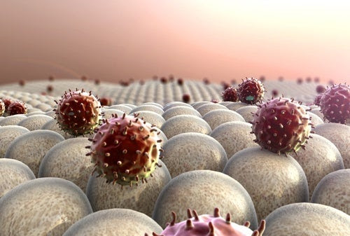 Celulas-do-sistema-imunologico