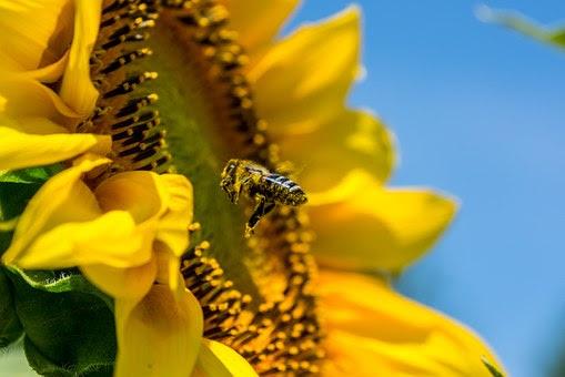Arılar Ile Ilgili şiirler