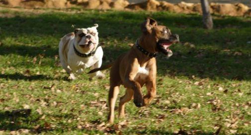 Risultati immagini per cani liberi al parco